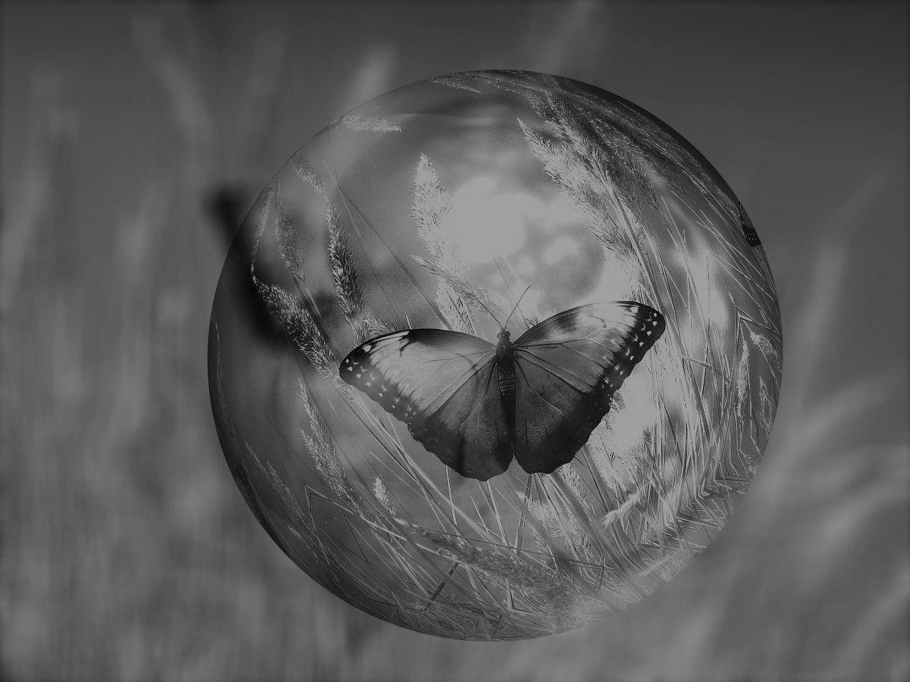 Ein Schmetterling auf der Wiese in schwarz-weiß.