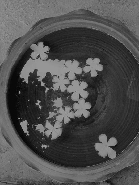 Schüssel mit Wasser und Blüten in schwarz-weiß